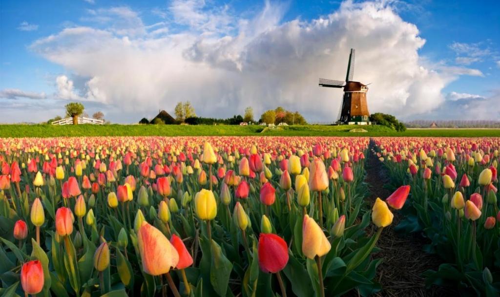 Майские праздники в амстердаме
